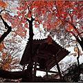 日本京都。常寂光寺