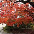 日本京都。仁和寺