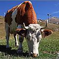 2011瑞士自助行第六天。策馬特【慢步Findeln小鎮】