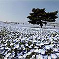 2015日本關東【国営ひたち海浜公園】