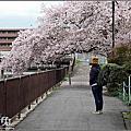 2017日本京都櫻花祭【墨染寺】
