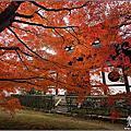 日本京都 。東福寺