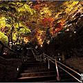 日本京都。高台寺&清水寺[夜楓]