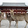 2007日本童話世界及古廟之旅(七)~宇治、奈良