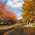 2009日本賞楓~面白山高原、霞城公園、仙台