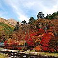 2009日本賞楓~塩原溫泉、紅葉谷吊橋、湯布的里足湯