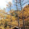 2013日本二度蜜月去~上高地