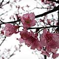 11.03.03石門.大溪花海農場