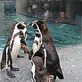 10.07.22旭山動物園.不好吃的櫻桃.小樽