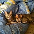 貓-饅頭包子