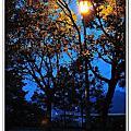 拱北殿的楓葉