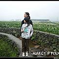 2008.04.12 陽明山.竹子湖.海芋 1