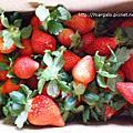 981212苗栗大湖無名子採草莓