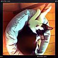 Mimi,最珍貴的六個月大幼貓期