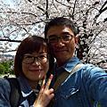 2014.4.3平安神宮看櫻花