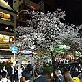 2014.4.3祇園白川