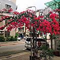 2017春天台北城