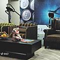外商科技業 BARCO 辦公室