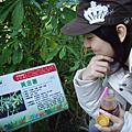 【台東之旅】植物園、史前博物館