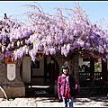 2011-04-04 AM 束河古鎮