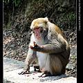 台東縣>東河鄉>泰源幽谷看猴子