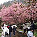 宜蘭台北賞花行day2武陵農場-2012/02/26
