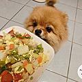 :: 毛小孩的鮮食料理 :: 貝喜寵物天然香草鈣X牛磺酸營養粉,讓寵物鮮食健康滿分!