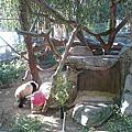 聖地牙哥動物園
