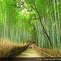 京都。嵯峨野竹林