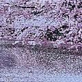 桜色の水面 (青森)