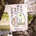 11' 04 10 五条川賞櫻