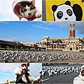 熊貓快閃 阿貴看熊貓  1600隻紙貓熊快閃凱達格蘭大道  1600隻紙熊貓即將於2/28台灣台北展出