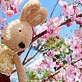 櫻木花道  桃園一日遊景點 來去櫻木花道看櫻花