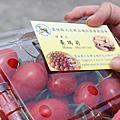 雲林旅遊 景點  雲林一日遊 採番茄  瑪莉夯