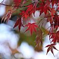 200911東京親子自由行Day4~箱根