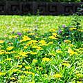 20090222-春意