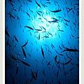 20100528長灘島水肺潛水