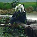 2013.7.27 台北木柵動物園+同居人一聚