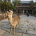 2016.2.28 日本奈良公園