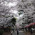 20130325 東京櫻滿開 DAY 2