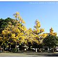 Day2.金色銀杏V.S紅色楓葉
