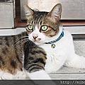 店貓咪們照片