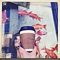 K Coffee|金魚電話亭