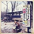 宮城藏王狐狸村|日本 東北