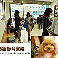 2014/02/02 桃園-普羅動物醫院(初診)