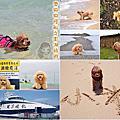 澎湖旅遊-寵物搭船篇