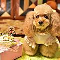2016/3/13紫寵愛義麵館&小米七歲生日