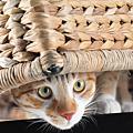 2009.11.29 拍貓貓~