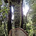 2012.04.29 拉拉山神木群
