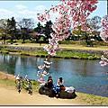 2013年日本京阪賞櫻之旅